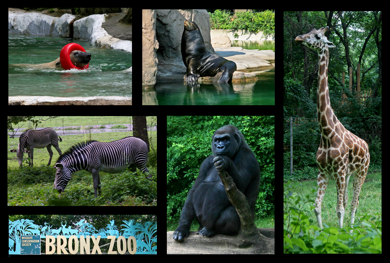 Bronx Zoo | New York Daily Photo